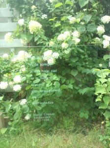 wie is glas 14 aug 2015witte bloemen