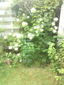 wie is glas met witte bloemen 2 14 8 2015